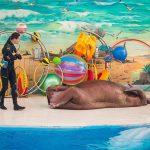 Большой Сочинский Дельфинарий Ривьера