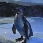 Пингвинарий Сочи